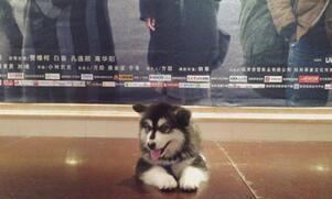 一只狗的爱情故事